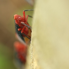 Treehopper01